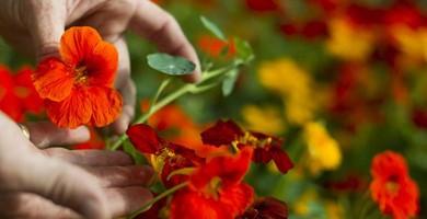 Las flores de primavera se cuelan en las apuestas de gastronomía