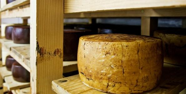 Vino y queso en las jornadas de Almaguer