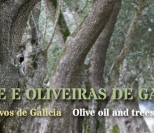 El olivar gallego en 98 fotografías
