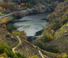 Los vinos como reclamo turístico de la Ribeira Sacra