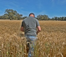 1.200 millones para impulsar las pymes agrícolas