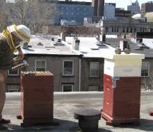 La apicultura urbana está de moda
