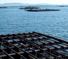 Cerrados todos los polígonos de producción de mejillón en Galicia