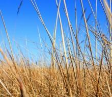 La sequía pone en jaque a los agricultores