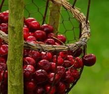 Las cerezas: fuente de salud