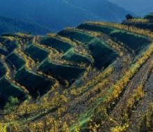 La vitivinicultura en el siglo XXI, el valor de un paisaje