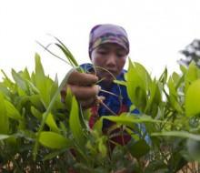 La FAO prueba que el hambre tiene solución