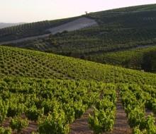 Vinagres de Montilla-Moriles con etiqueta en Europa