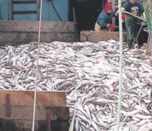 Bruselas propone modificar las cuotas de pesca
