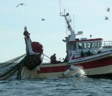 Ecologistas contra la pesca de arrastre