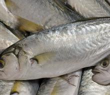 Semana de los Productos Pesqueros