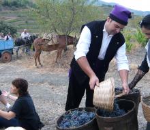 Poboleda prepara su fiesta de la vendimia «a la antigua usanza»
