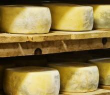 Semana del queso