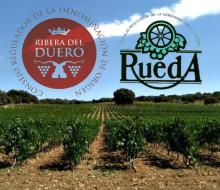 Los vinos Ribera del Duero y Rueda apuntan a EE.UU