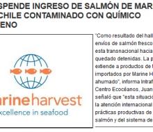 Estados Unidos prohibe la entrada de salmón de Marine Harvest