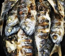 Sardina a 15 euros el kilo
