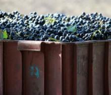 El vino rompe récords en España