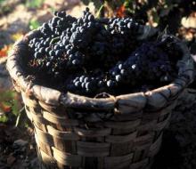 Éxito de la XX Fiesta de la Vendimia de la Rioja Alavesa