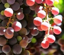 La mineralidad de los vinos a estudio
