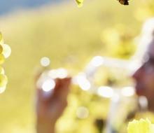 Madrid premia sus vinos