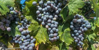 Rutas del vino en México