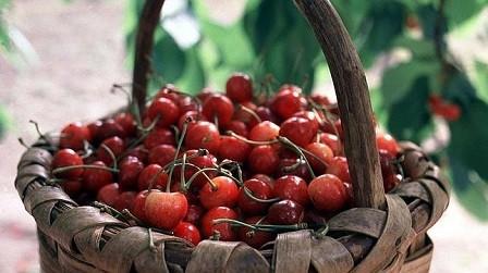 El Valle del Jerte promociona su cereza picota