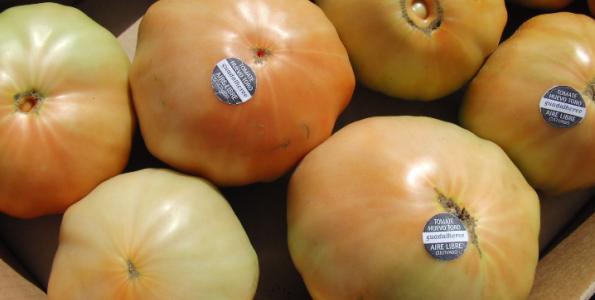 El Valle del Guadalhorce enseña sus tomates