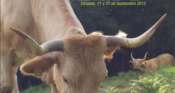 Elizondo (Navarra) reivindica el ganado vacuno pirenaico