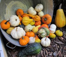 Beneficios de la calabaza, la hortaliza del otoño