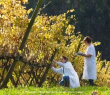Un túnel del vino para disfrutar de las Rías Baixas