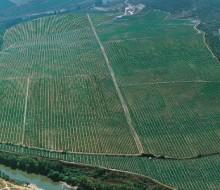 La Bodega Lan, primera en vendimiar en la Rioja Alta