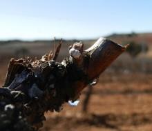 Agricultura de precisión en los viñedos