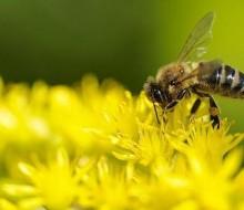 Advertencia sobre el descenso de abejas y pájaros
