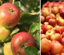 Alimentos ecológicos vs convencionales