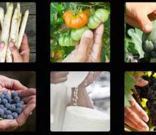 Reyno Gourmet inicia una campaña por lo «auténtico»