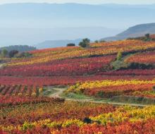 Rioja y Rioja Alavesa, hacia el Patrimonio Mundial