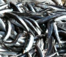 País Vasco a la cabeza en consumo de productos pesqueros en España