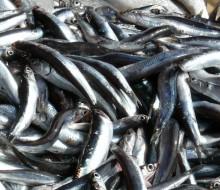 Crece la exportación agroalimentaria y pesquera