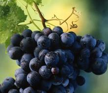 Salvaterra de Miño despide el verano con buen vino