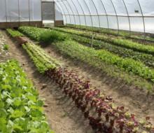 Más actividad y menos paro en servicios y agricultura