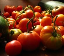 Un concurso premiará al mejor tomate Gipuzkoano