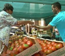 Feria del Tomate de Mansilla
