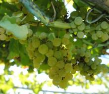 Premios Alimentos España al vino 2014