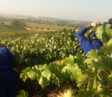 4.000 nuevos empleos en la Ribera del Duero